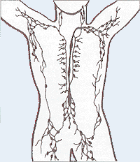 Lymphatic system and sentinel lymph nodes